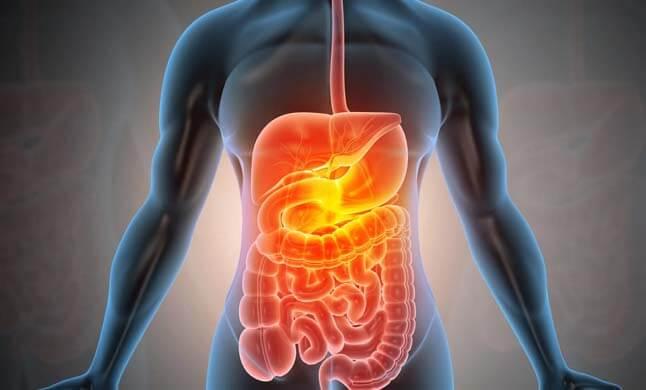 Câncer do Aparelho Digestivo site dr olavo filho
