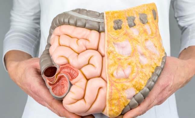 Doenças Proctologicas site dr olavo filho